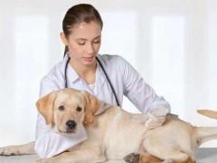 宠物医院值得投资吗 ?发展前景怎么样?