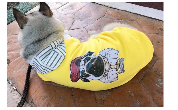 CATALPA宠物用品.jpg