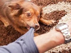 宠物狗被遗弃后: 咬伤他人的原主人是否承担责任?