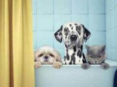意大利保护动物组织称疫情影响宠物福利,呼政府发放补贴救济!