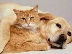 珠海成为第二个禁食猫狗城市#禁止食用伴侣动物