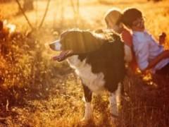 宠物市场2020年将破2000亿, 宠物医保正成创业风口!