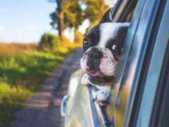 多个城市出台养犬新政 论如何科学遛狗