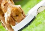 2020年我国宠物饲料需求旺盛 河北省宠物饲料产量居全国第一
