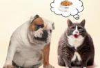 互联网催热宠物服务行业 详解那些宠物市场前瞻性与预见性