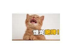 如何训练一只橘猫?尝试了各种方法,真的是太难了