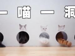 终于找到防止猫咪互相抢食的好办法了!