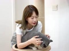 自己在家给五只猫体检,结果真让人头大!