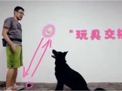 """想要狗狗松口?奖励交换训练,让你的狗狗听懂""""吐""""的口令"""
