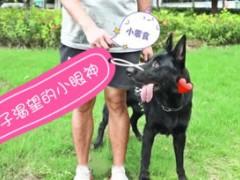 【联合萌宠】狗狗训练 | 如何让狗狗听话随行?三句话总结,铲屎官快来取经!
