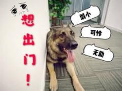 【联合萌宠】狗狗训练 | 狗狗进出门礼仪