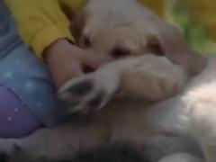 感人的法国宠物广告:它用一生在陪伴你左右!