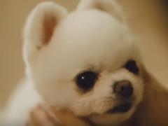 韩国温馨宠物广告:在家门口等候主人的狗狗!