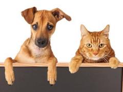 惊呆!国内大型线上宠物博览会平台正式上线!