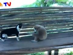猫和猴子打架,真不是对手啊,打不过又跑不赢