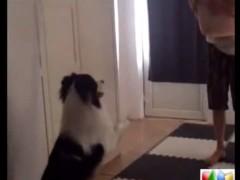 训 练 狗 狗