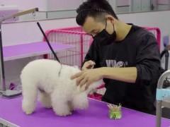 颐爱宠物宣传片
