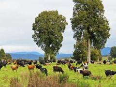 中宠宣布收购新西兰最大宠物罐头代工厂,耗资约人民币1.54亿