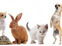 宠物疾病预防,5大科学措施,让宠物一生健康无病