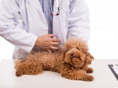 狗狗注射疫苗3大误区,现实生活中很多主人都在做,却始终没改变 ...