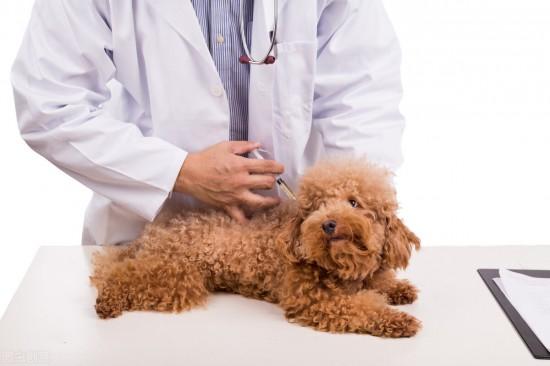 狗狗注射疫苗3大误区,现实生活中很多主人都在做,却始终没改变
