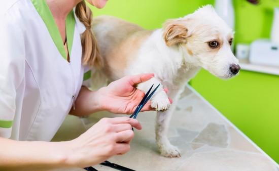 狗狗皮肤受损或被感染了,如果不理它,多久会好?