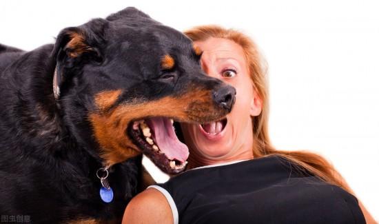 宠物健康,如何从口部、皮毛判断犬的健康状况