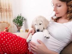 宠物犬健康,宠物犬与孕妇