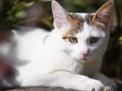 透过猫咪的眼睛,快速解密它的一举一动