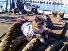 航海科普——为什么商船上不能养宠物