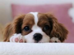 聪明狗狗如何养成?社会化训练是关键