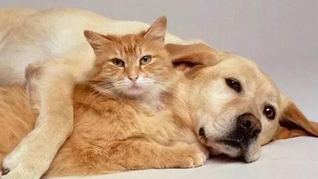 珠海成为第二个禁食猫狗城市#禁止食用伴侣动物#