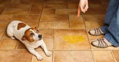 狗狗乱拉乱尿怎么办?纠正狗狗乱拉乱尿的行为!