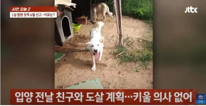 杀狗炖汤被判刑6个月!韩国《动物保护法》发威