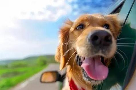 宠物狗坐汽车副驾驶位是否违法?